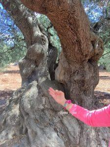Mamma Guru: Abbracciare gli Alberi ed i suoi molteplici benefici
