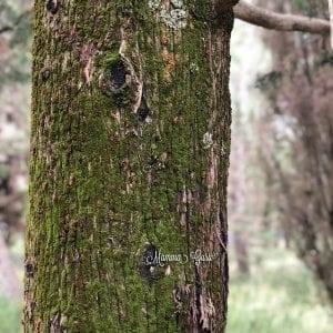 Shinrin Yoku: il mio speciale bagno nella foresta